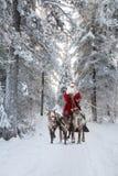 圣诞老人和他的驯鹿在森林里 免版税图库摄影