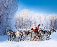 圣诞老人和他的驯鹿在森林里 免版税库存照片