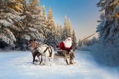圣诞老人和他的驯鹿在森林里 免版税库存图片