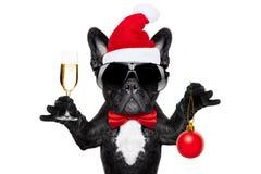 圣诞老人圣诞节狗 免版税库存图片