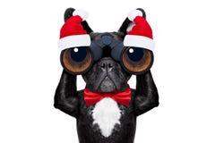 圣诞老人圣诞节狗 图库摄影