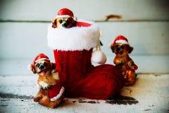 圣诞老人在红色起动的圣诞节狗 库存图片