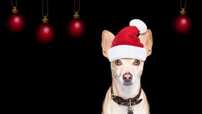 圣诞老人在黑backgroud的圣诞节狗 免版税库存照片