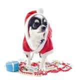 圣诞老人奇瓦瓦狗 免版税库存照片