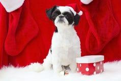 圣诞老人小狗。 免版税库存图片