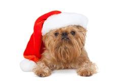圣诞老人小狗 图库摄影