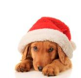 圣诞老人小狗 免版税库存照片