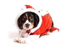 圣诞老人小狗 库存图片