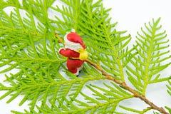 圣诞老人小雕象在金钟柏叶子站立 库存图片