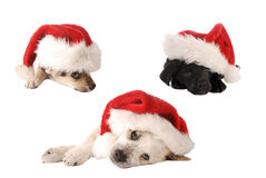 圣诞老人帽子圣诞节小狗 免版税图库摄影