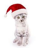 圣诞老人帽子猫 免版税库存图片