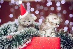 戴圣诞老人帽子的两只小猫坐礼物盒 免版税图库摄影