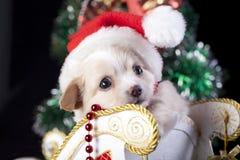 戴圣诞老人帽子的小狗 免版税库存图片
