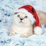 戴圣诞老人帽子的小猫 库存图片