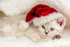 戴圣诞老人帽子的小的小猫 库存图片