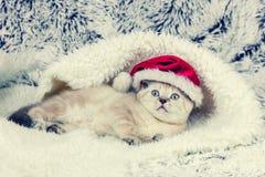 戴圣诞老人帽子的小的小猫 免版税库存照片