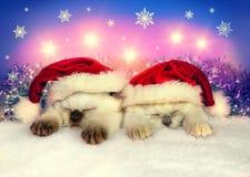 戴圣诞老人帽子的小的猫 免版税库存照片