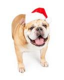 戴圣诞老人帽子的愉快的牛头犬 库存图片
