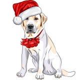 圣诞老人帽子的拉布拉多  免版税库存照片