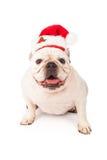 戴圣诞老人帽子的牛头犬 库存照片