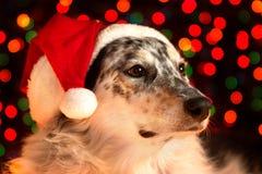 戴圣诞老人帽子的狗的特写镜头 免版税库存图片