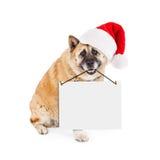 戴圣诞老人帽子的秋田狗运载空白的标志 免版税图库摄影