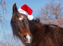戴圣诞老人帽子的黑暗的海湾马 库存照片