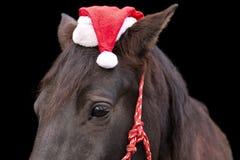 戴圣诞老人帽子的黑马 免版税库存图片