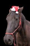 戴圣诞老人帽子的黑马 图库摄影