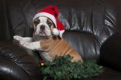 圣诞老人牛头犬 库存照片
