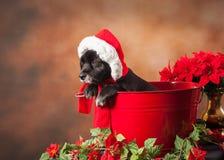 圣诞老人狗画象 库存图片