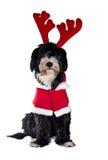 圣诞老人狗 库存照片
