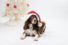 圣诞老人狗 图库摄影