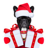 圣诞老人狗 免版税图库摄影