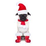 圣诞老人狗 免版税库存照片