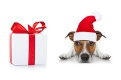 圣诞老人狗 库存图片