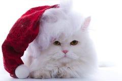 圣诞老人猫 库存照片