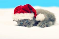 戴圣诞老人的帽子的小猫 免版税库存照片