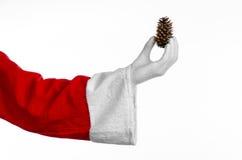 圣诞老人题材:圣诞老人在他的手上的拿着一冷杉球果在白色背景 免版税库存图片