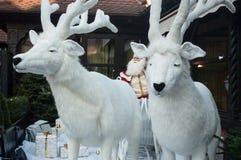 圣诞老人驯鹿  免版税库存照片