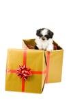 圣诞节一只小狗 免版税库存照片