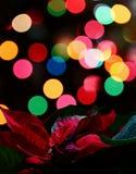 圣诞节一品红植物 免版税库存图片