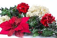 圣诞节一品红 图库摄影