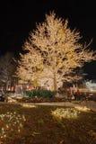 圣诞节三角叶杨点燃结构树 库存照片