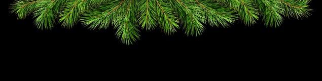 圣诞节上面边界的绿色杉木枝杈 库存图片