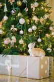 圣诞节下兔子结构树 库存图片
