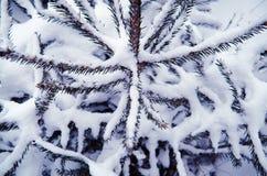 圣诞节下雪结构树 免版税库存照片