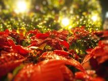 圣诞节与光的金球 免版税库存照片