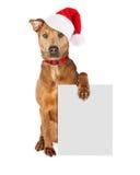 圣诞节与空白的标志的圣诞老人狗 图库摄影