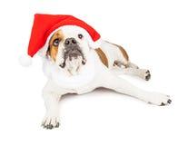 圣诞节与空白的标志的圣诞老人狗 库存照片